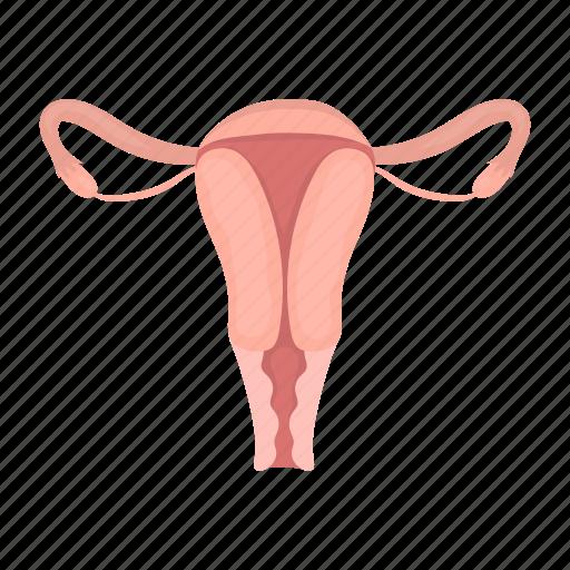 female, fertile, fertilization, internal, organ, uterus icon