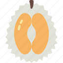 durian, eat, food, fruit, kitchen, vegetable icon
