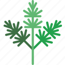 dill, eat, food, fruit, kitchen, vegetable icon