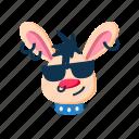 animal, cool, glasses, grin, punk, rabbit, smile icon