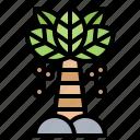 botanic, indo, palm, plant, tree icon