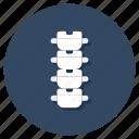 backbone, spinal column, spinal cord, spine, vertebrae icon