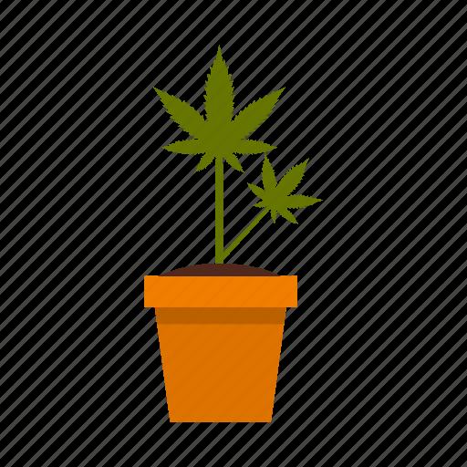 cannabis, drug, growing, herb, marijuana, plant, pot icon