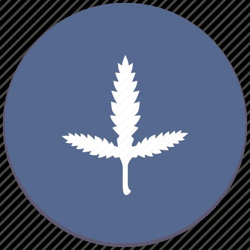 branch, canabis, leaf, plant icon