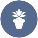 calendula, flower, home, plant icon