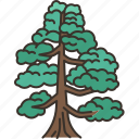 pine, tree, plant, forest, nature
