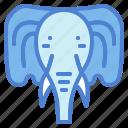 animal, cultures, elephant, mammal
