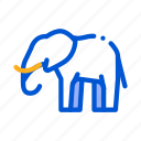 animal, elephant, safari, travel