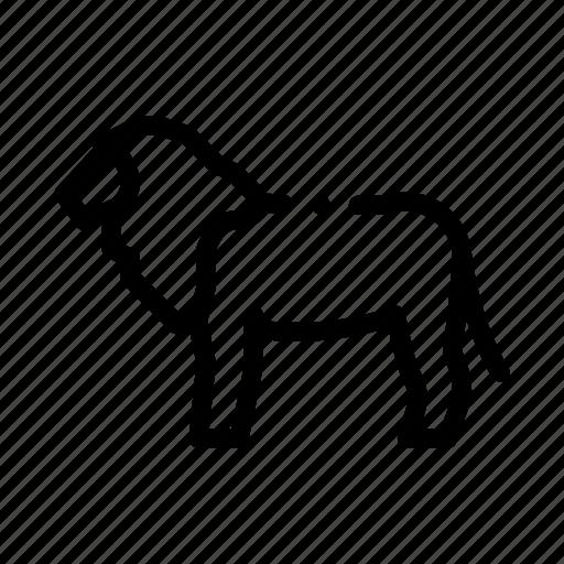 lion, safari, travel icon