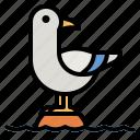 seagull, bird, animals, fauna, animal