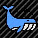 whale, fish, animal, kingdom, life