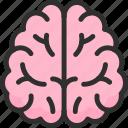 anatomy, biology, body, brain, education, part, school