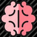 study, brain