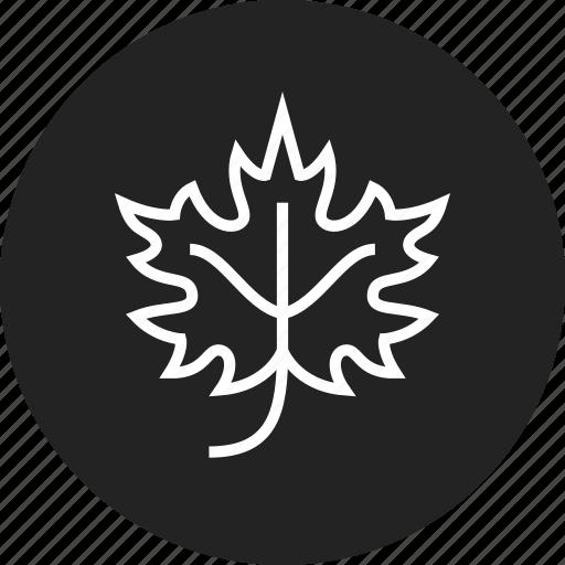 autumn, leaf, maple icon