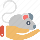 science, animal, hand, laboratory, mouse, pet, rat