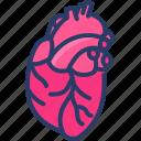 anatomy, cardiology, cardiovascular, heart, human, organ icon
