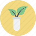 agriculture test, botany experiment, lab experiment, plant research, science project icon