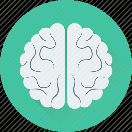 brain, brainstorming, creative, intelligence, organ icon