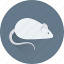 animal, bio, experiment, mouse, rat icon