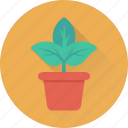 flower, greenery, nature, plant, pot
