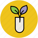 agriculture test, botany experiment, lab experiment, plant research, science project, test tube icon