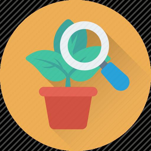 botany, experiment, leaf, magnifying, plant icon