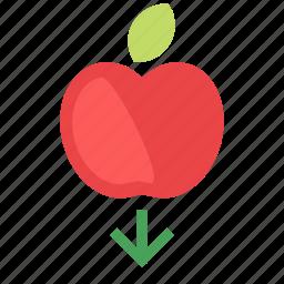 apple, arrow, down, gravity, newton icon