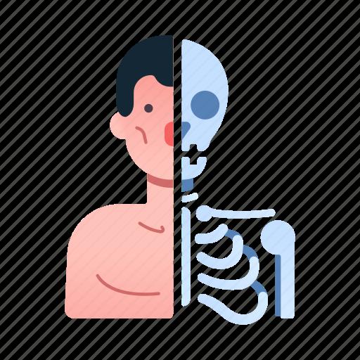 anatomical, anatomy, body, health, human, medical, sciece icon