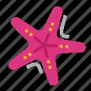 ocean, animal, starfish, sea
