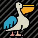 pelican, animal, ocean, wild, bird