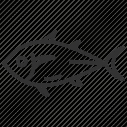 fish, food, seafood, tuna icon