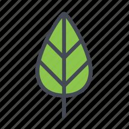autumn, leaf icon