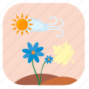 flower, plant, summer, sun icon