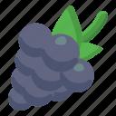 blackcurrant, genus vitis, organic, fruit, natural berries