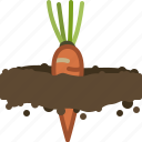 carrot, farm, garden, gardening, seeding, vegetable, yumminky icon