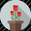 flower, rose, plant, nature, green, garden, tree