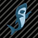 shark, wild, marine, animal, cute, predator, fish icon