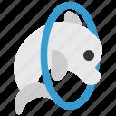 circus, dolphin, dolphinarium, representation, show, training icon