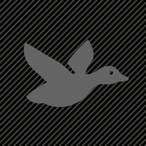 Fly, hunting, drake, catch, duck, wild, bird icon