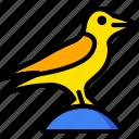 bird, holiday, raven, season, yellow