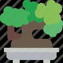 belongings, bonsai, furniture, households