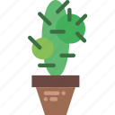 belongings, cactus, furniture, households icon