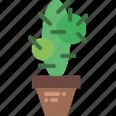 belongings, cactus, furniture, households