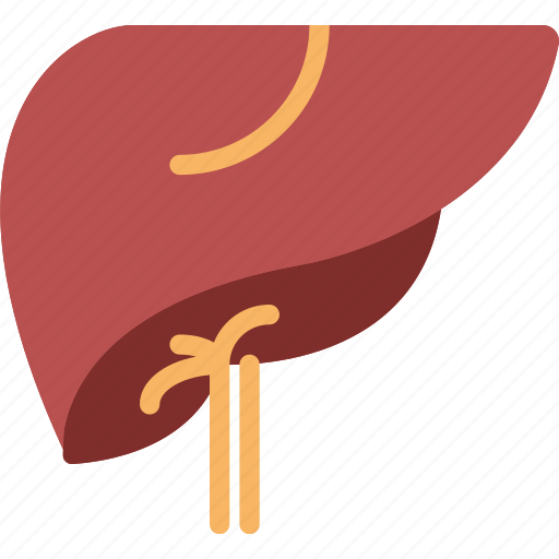 health, healthcare, liver, medical icon