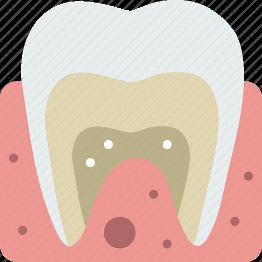 anatomy, dental, health, healthcare, medical icon