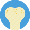 bone, health, healthcare, medical, spongy icon