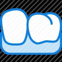 health, healthcare, lower, medical, premolar icon