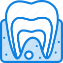anatomy, dental, health, healthcare, medical icon