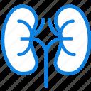 health, healthcare, kidneys, medical