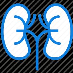 health, healthcare, kidneys, medical icon